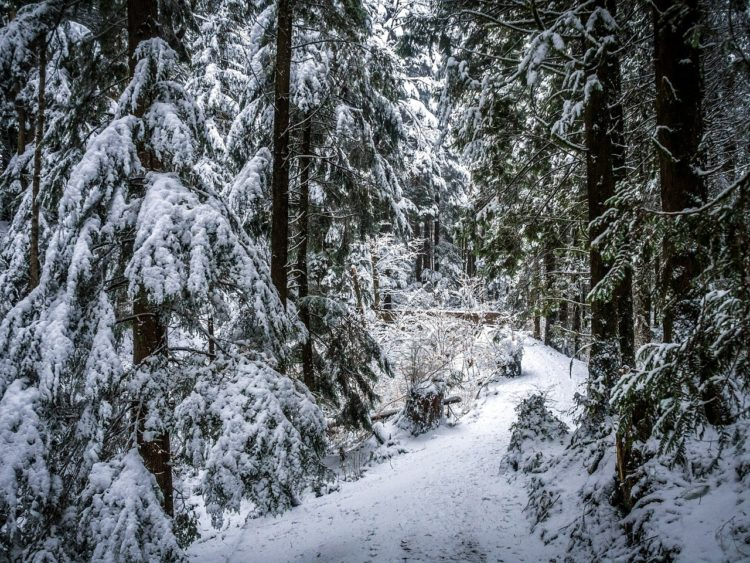 Как непропасть в лесу