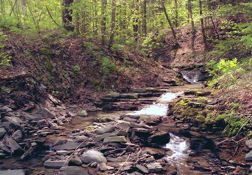 Источник питьевой воды летом в лесу